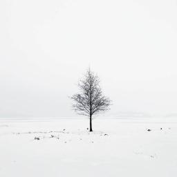 freezingwind